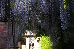 Durchblick unter Blauregen zum Klostergarten-min