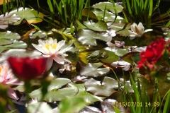 Frosch im Wasserbecken vom Klostergarten-min
